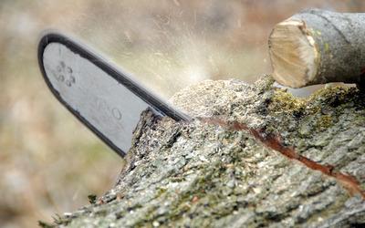 Tuinen Van Cappellen - Vellen van bomen